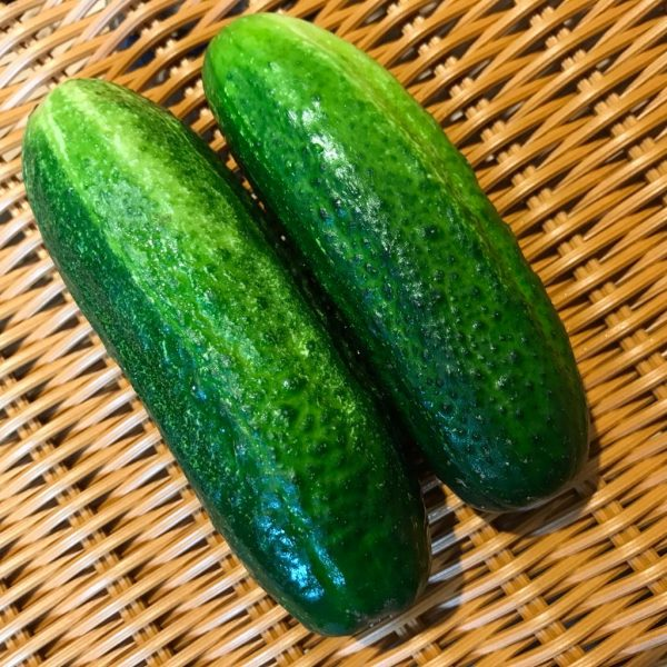 pick your own cucumbers